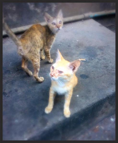 Stray kittens outside the hostel in Yangon
