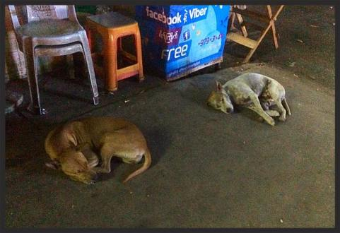 Dogs sleep beside the street vendor stall