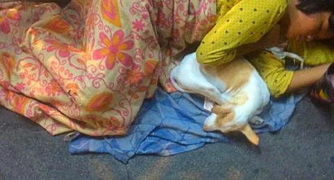 A Burmese lady sleeps with her dog at Yangon Central Train Station